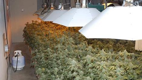 ontario landlords tenants plants marijuana grow op